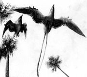 Confuciusornis, toothless fossil forest birds from the Early Cretaceous of China