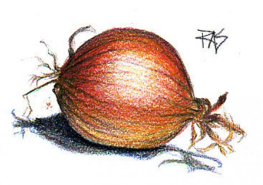 """Onion,"" colored pencil on paper by Robert A. Sloan"