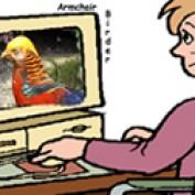 armchair birder profile image