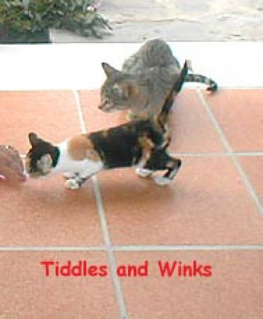 Tiddles and Winks adopted us in Gibraltar