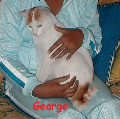 George arrived to relieve our wedding dinner reception stress