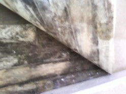 Rising Damp: How to Recognise It and What to Do