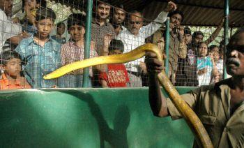 Snake park -Chennai