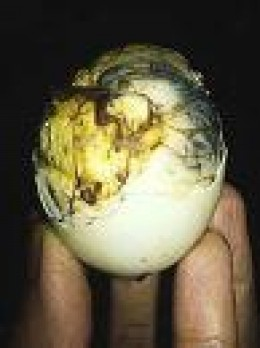 Balut egg with chick as an aphrodisiac/ thephilippineisland.com