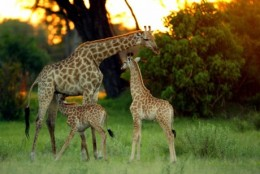 african-safari-and-travel-advisor