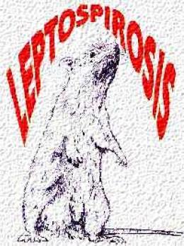 http://health.cd-writer.com/?cat_id=12&prod_id=392&type=multimedia&image=http://epi.minsal.cl/epi/html/public/images/leptos3.gif