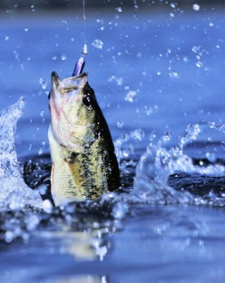Freshwater vs. Saltwater Florida Fishing