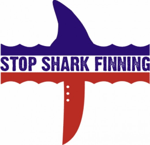 persuasive essay shark finning