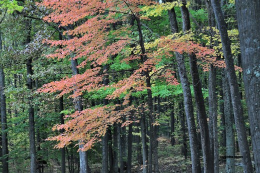 Meanwhile, the woods shows its colors contasted by the dark trunks of the trees.