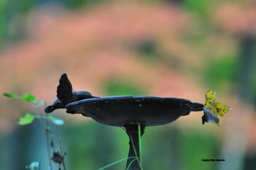 A birdbath is silhouetted against the woods with a leaf sticking off the side.