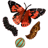 representations of egg, larva, chrysalis, and aduly Painted Lady butterfly