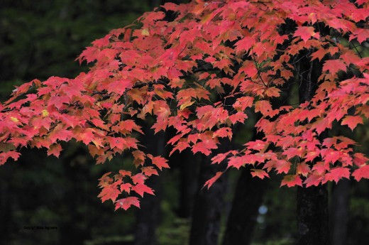 Color still punctuates the woods.