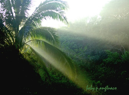 Morning has broken, early morning light with the sun's rays streaming