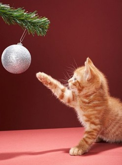 Christmas Decorations and Your Cat's Safety
