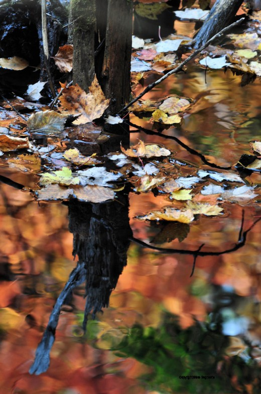 The remnants of an old board waterway slow the creek and turn it to the north, making a small reflecting pool.