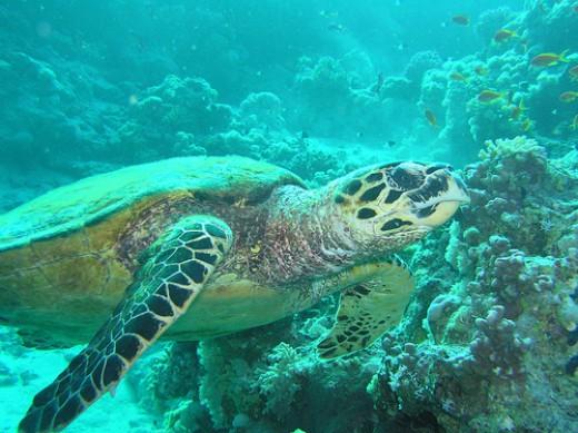 of Indonesias marine wildlife. A total of 3500 fish spesis Indonesia ...