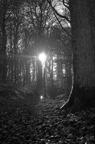 Saoire - Fairy Trees  @ www.flickr.com