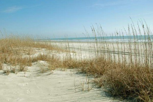 Seagrass and Dunes on NMB