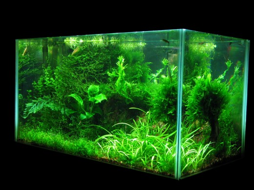 We offer a large variety of Aquarium Supplies including both Tropical Fish Supplies and Saltwater Aquarium Supplies for your fish tank. Our products range from