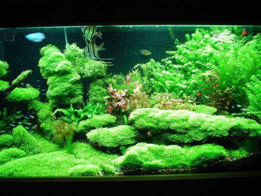 Hubmaga 55 Gallon Aquarium Guide To Freshwater Aquariums