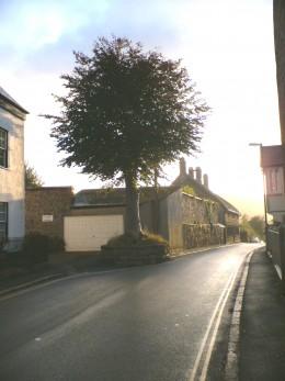 Moretonhampstead, The Dancing Tree