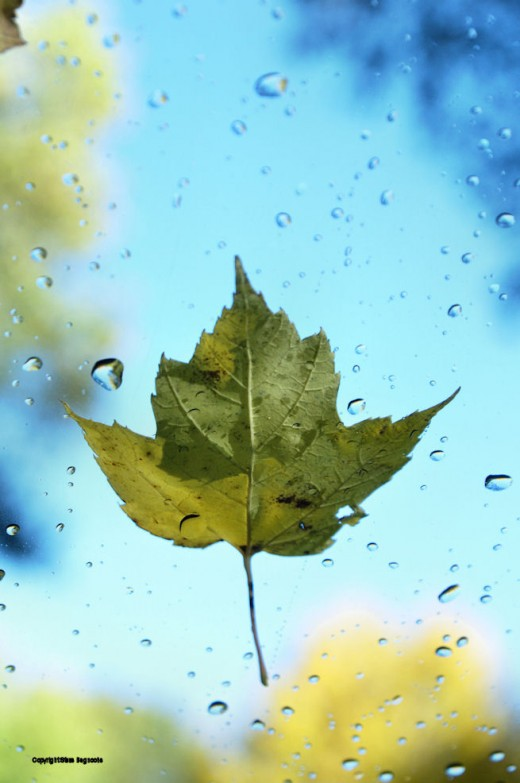 A leaf and drops of water from frost melting in the trees above are plastered to a car windshield.