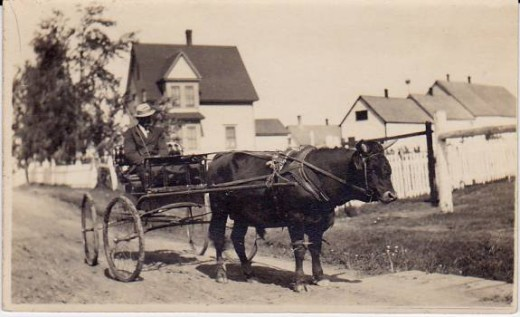 Horse Cart (location unknown)