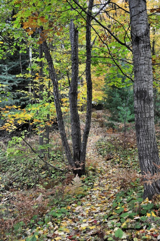 The path between the house and the creek is paved in gold(en) leaves.