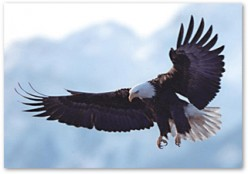 Learning To Soar Above Like An Eagle