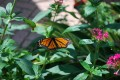The Toledo Zoo Butterfly Conservation Center