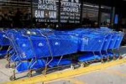This is a small herd of rare Blue Carts.