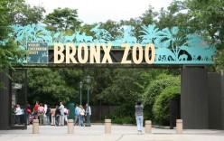 Corporate America's Leadership Zoo