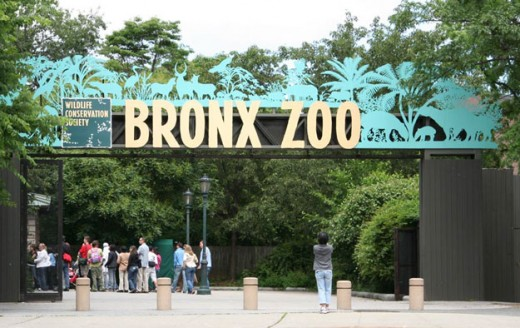 http://www.visitingdc.com/images/bronx-zoo-address.jpg