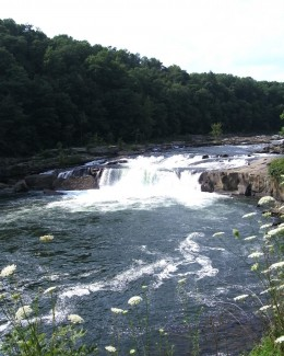 Ohiopyle Falls (20 feet high)