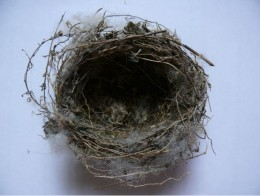 Empty Nest Morgue file