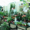 Indoor Gardening - How to step up Beautiful Garden inside your Home