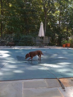 The Importance of Swimming Pool Covers