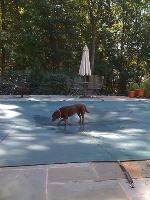 This pool cover kept the dog out.