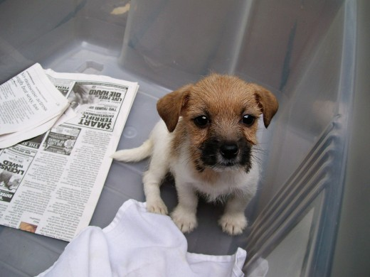 I promise to go on the paper if you let me out.