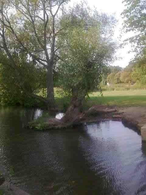 Trees streams rivers Marlow Bucks