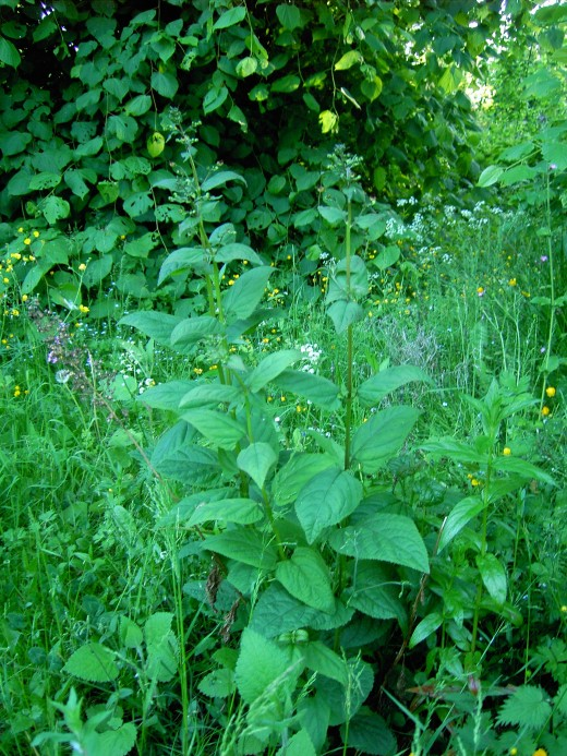 Nature s pharmacy plants used as medicine