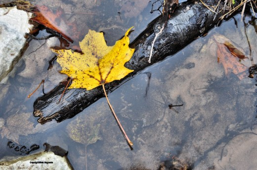 If this leaf gets free of the stick it, in theory, could float to the sea.