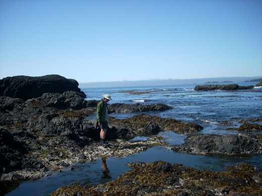 Exploring the tidal pools on Gordon Islands