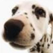 kris.veni profile image