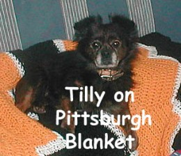 Tilly snuggling with her foster dad on my Pittsburgh afghan