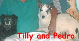 Tilly begrudgingly sharing her foster dad's lap with Pedro