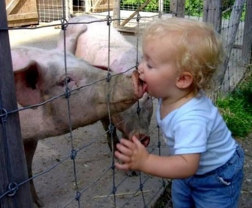 Swine Flu - origin?