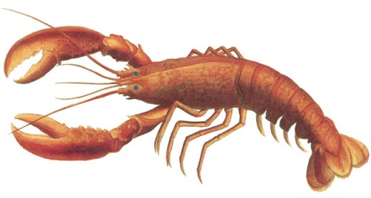 Crayfish are like tiny lobsters...they make great bait and the large ones are great to eat!