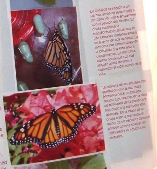 Helping Monarch Butterflies