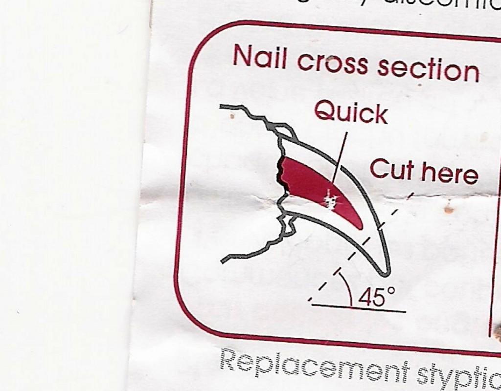 Dog Nail Care Tips 98